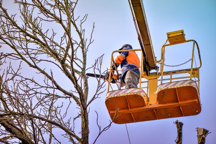 tree trimming service nashville