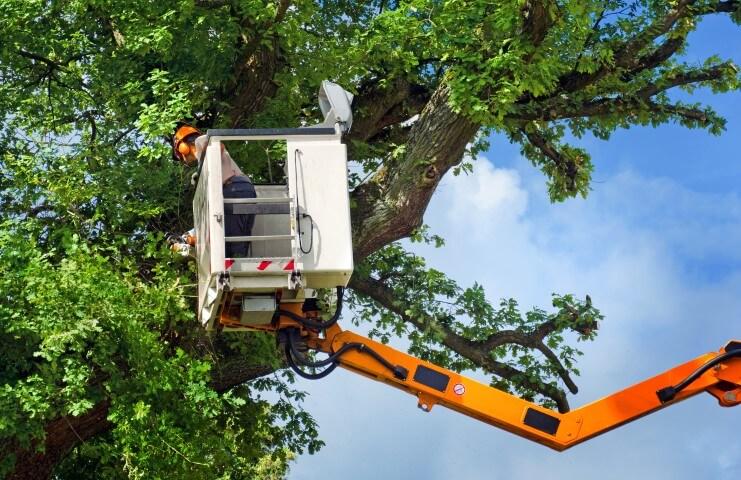 nashville tree trimming
